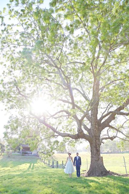 Weddings 14 014